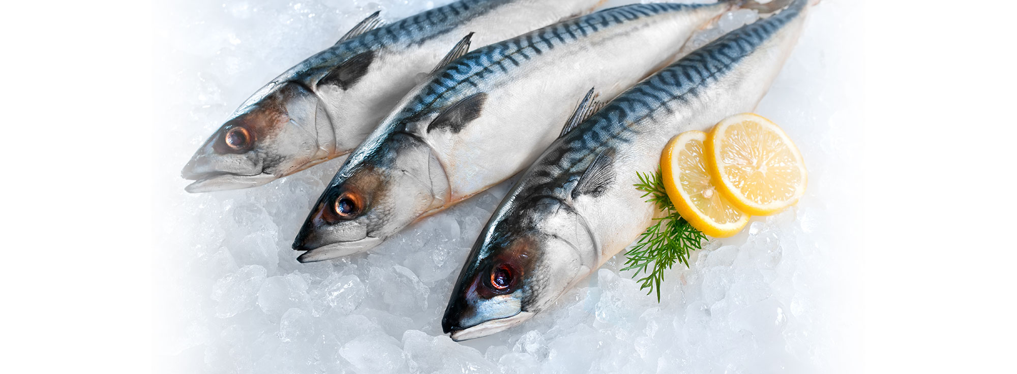 herring 2018 rostock